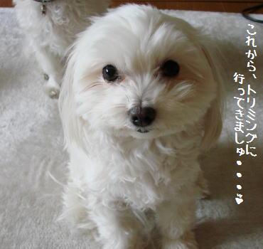 20070217_7.jpg