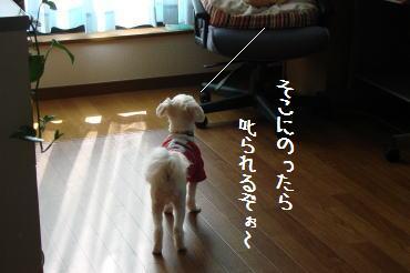 20070301_3.jpg