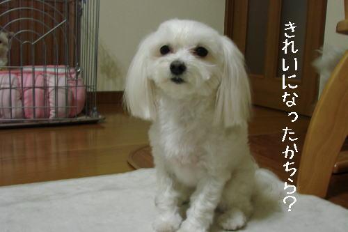 20070319_5.jpg