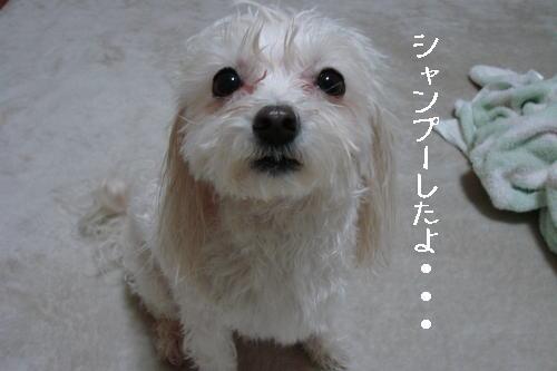 20070319_6.jpg