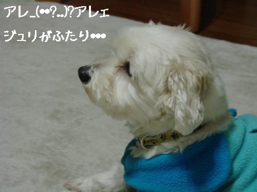 20070320_4.jpg