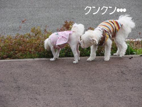 20070324_15.jpg