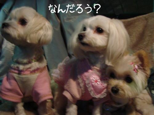 20070406_5.jpg