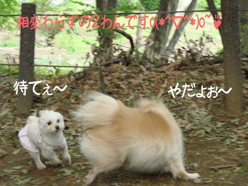 20070422_10.jpg