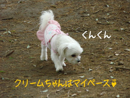 20070422_9.jpg