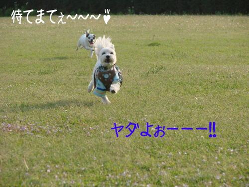 20070505_8.jpg