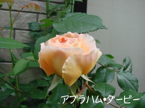 20070510_2.jpg