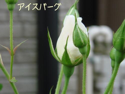 20070510_3.jpg