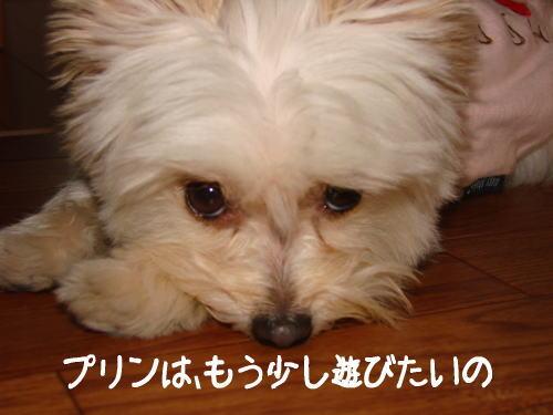 20070513_4.jpg
