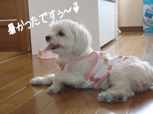 20070513_6.jpg