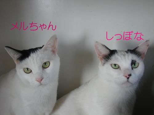 20070827_2.jpg