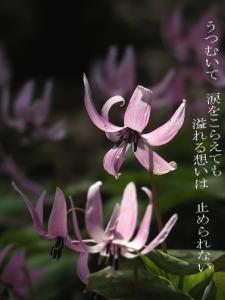 image38.jpg