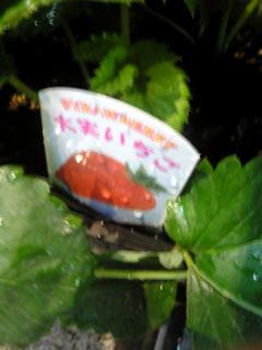 20071015苺