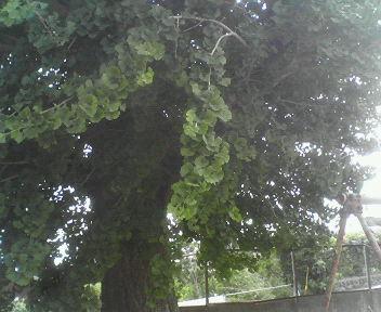20070603simabaragakou5