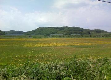 ブタナのある風景