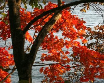 大沼公園紅葉4