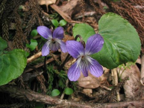 花の色が濃い個体