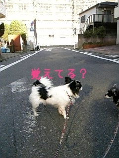 20070227012310.jpg