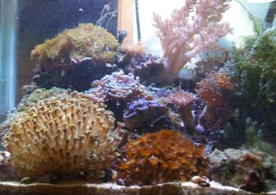 サンゴ水槽20061219