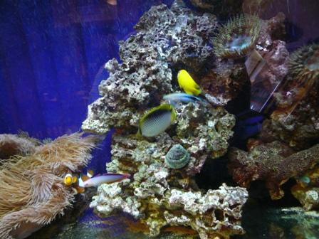 魚水槽右側