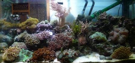 サンゴ水槽20070304