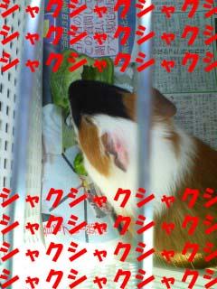 070607_1354~01.jpg
