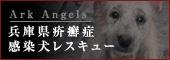 兵庫県疥癬症感染犬レスキュー