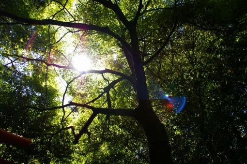 京都の太陽