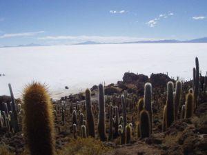 300px-Isla_de_Pescado_Uyuni_Bolivia.jpg