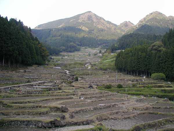 千枚田全景