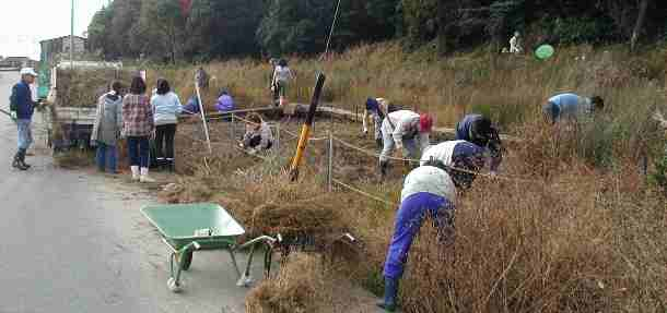 湿原の除草作業
