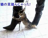 猫の足踏んじゃった