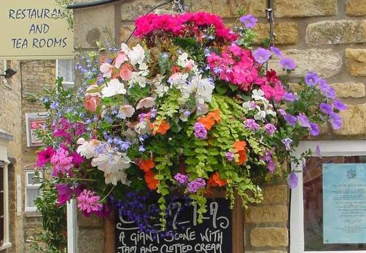 bourtonflower.jpg