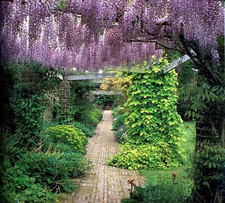 wistaria12.jpg