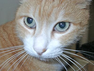 ナーゴ:眼孔-先を見つめる目