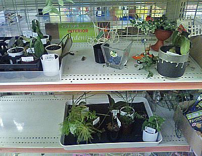 誰か観葉植物に水をやってくれ