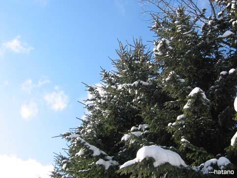 雪と樹と空