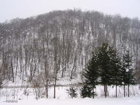 嵐山12月23日