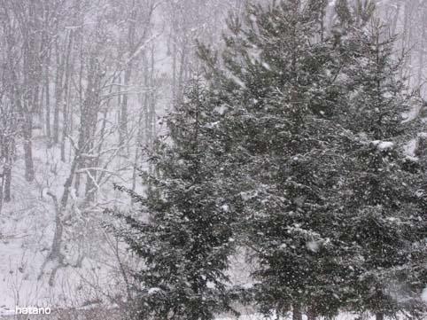 1月10日の雪なのだ