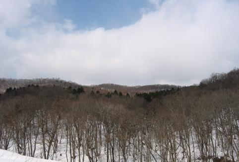 林の色3月29日