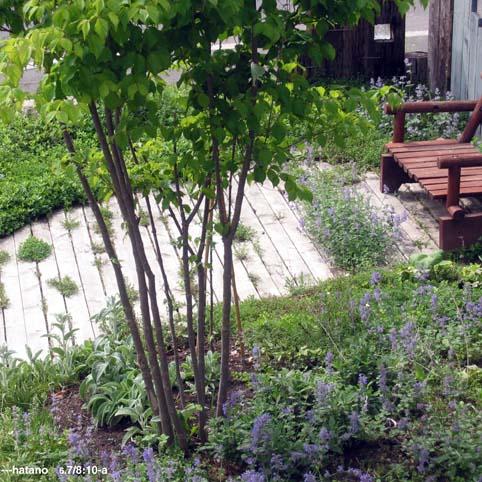 雨上がりの前庭