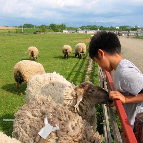 羊上のしのぶさん