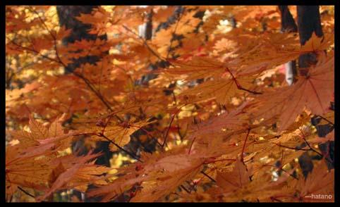 秋色の山道1