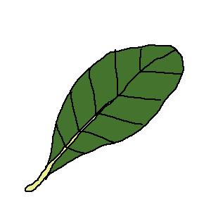 朴の葉っぱ