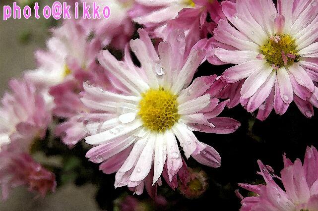 DSC_1390suisai.jpg