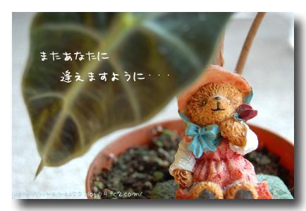 amayadori1.jpg