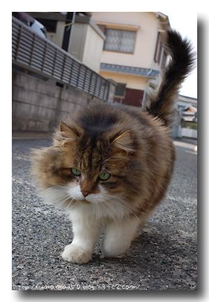 chatine1.jpg