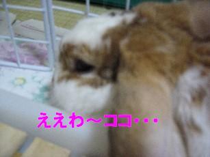 IMG_2262.jpg
