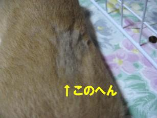 IMG_2411.jpg
