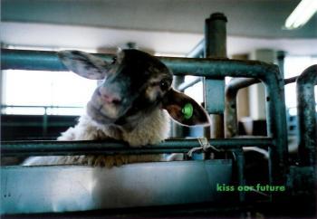 今年生まれの子羊ちゃん